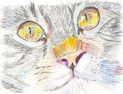 chat au crayon 12 2009