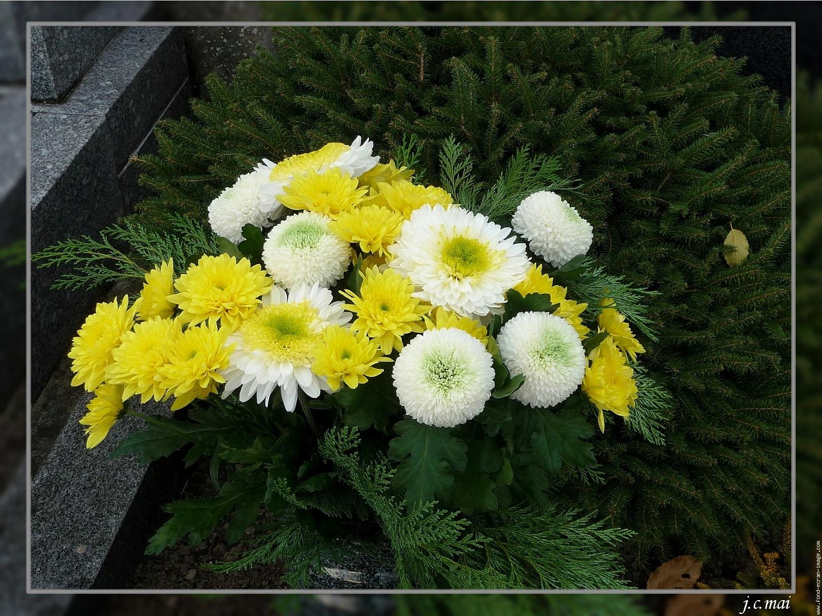 chrysanthemes assortis 1
